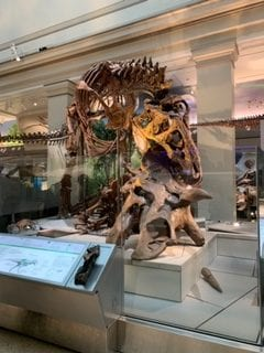 A Blog Post 65 Million Years in the Making…