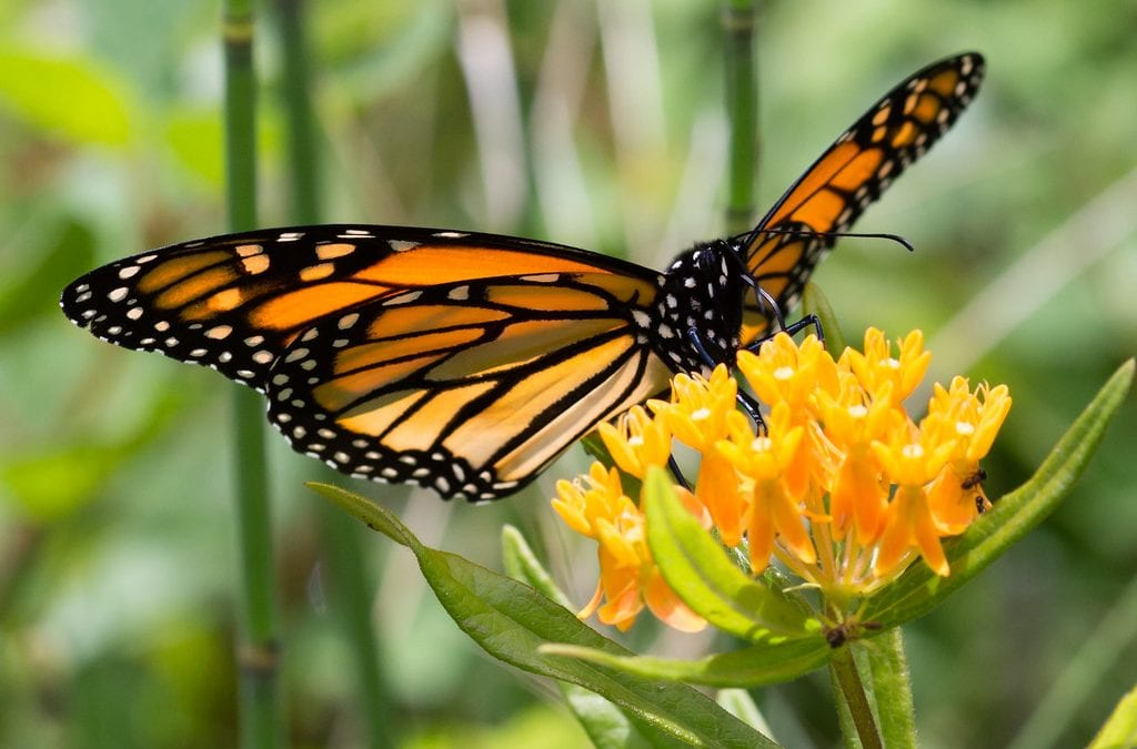 1. Monarchs and Their Decline