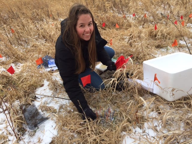We were out setting up a germination experiment in the snow