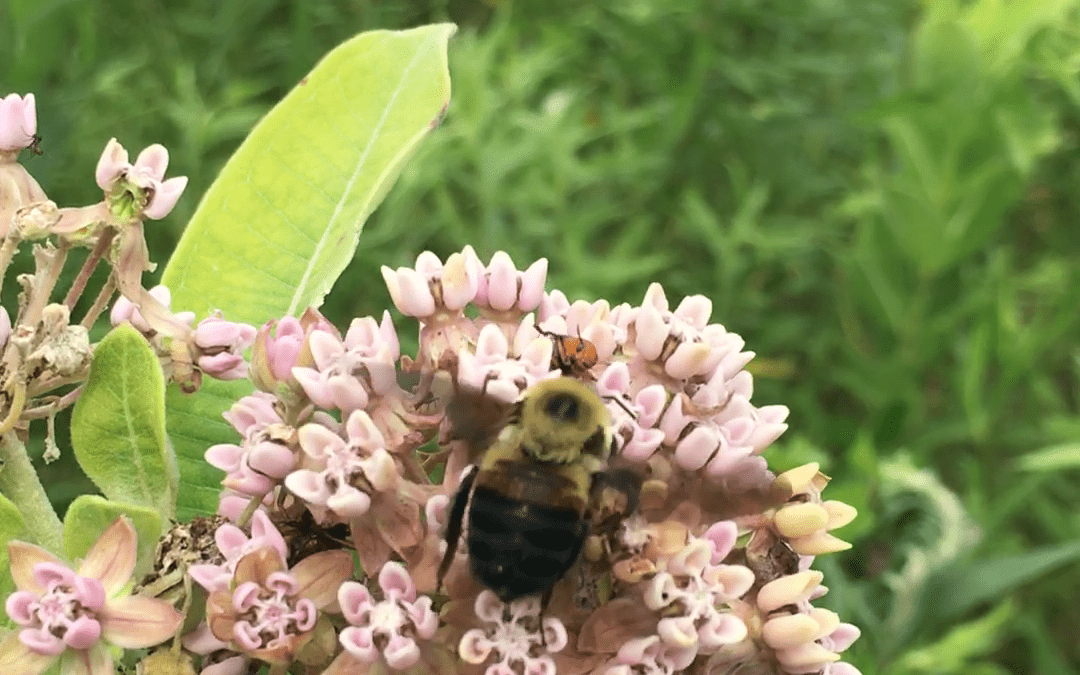 More Pollinator Images