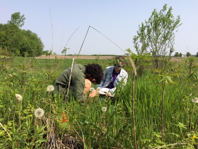 Two students collecting data in the field.