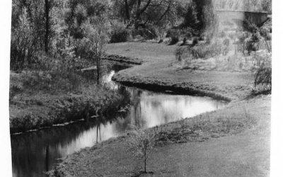 Upper Arboretum