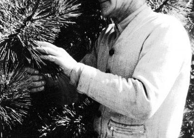 John Berntsen with pine trees.