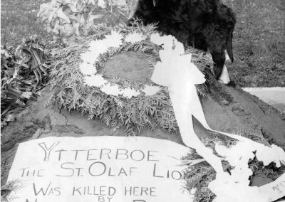 Ytterboe the Dog II (replacement pup) Guards His Predecessor's Gravesite, May 24, 1957.